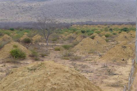 year  termite mounds  visible  space