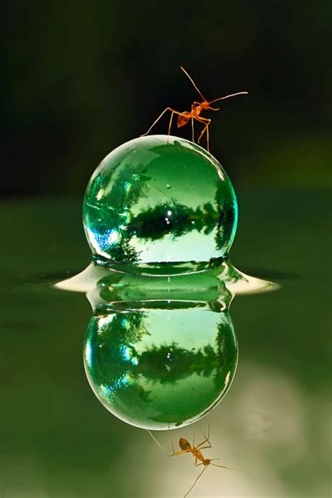 Teguh Santosa macro photography 163 macro ants 1 quot and