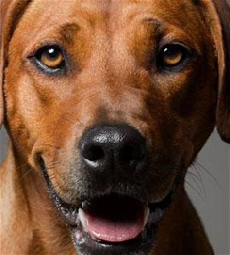 hund kastrieren wann alles zur gesundheit des hundes hunde de