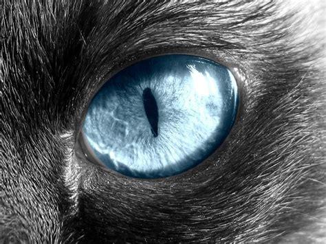 Cat Eye Blue Berkualitas cat eye by charlopunk on deviantart
