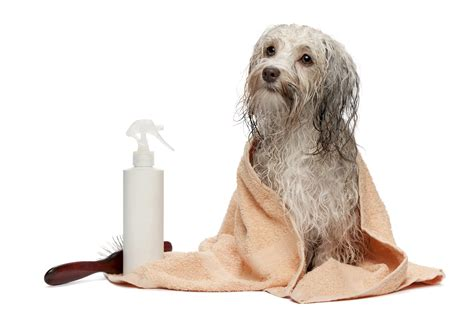 flea baths for dogs grooming doggie central