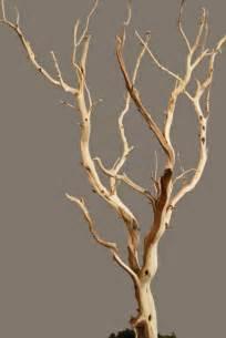 manzanita branch live plants for time keeper chameleon forums