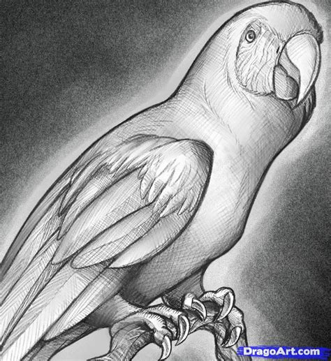 How To Sketch A Parrot Step By Step Sketch Drawing Technique Free Online Drawing Tutorial Drawing Sketch