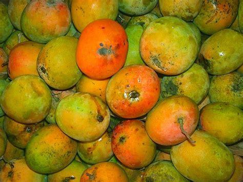 Minyak Zaitun Bertolli Di Indo 7 kota di indonesia dan buah sebagai ciri khasnya yuk piknik