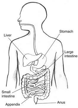 alimentazione appendicite appendicite sintomi diagnosi dieta e terapia farmaco