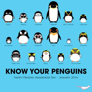 5 Things You Probably Didn't Know About Penguins | Mostly ...