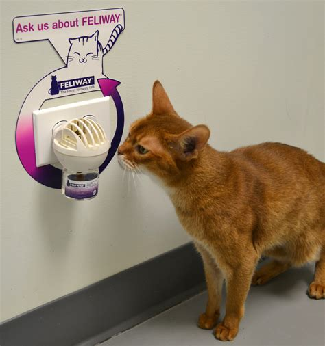 cat friendly practice your pet s wellness