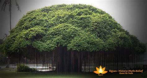 worship  banyanbargad tree rgyan