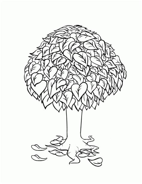 free coloring pages of pecan tree