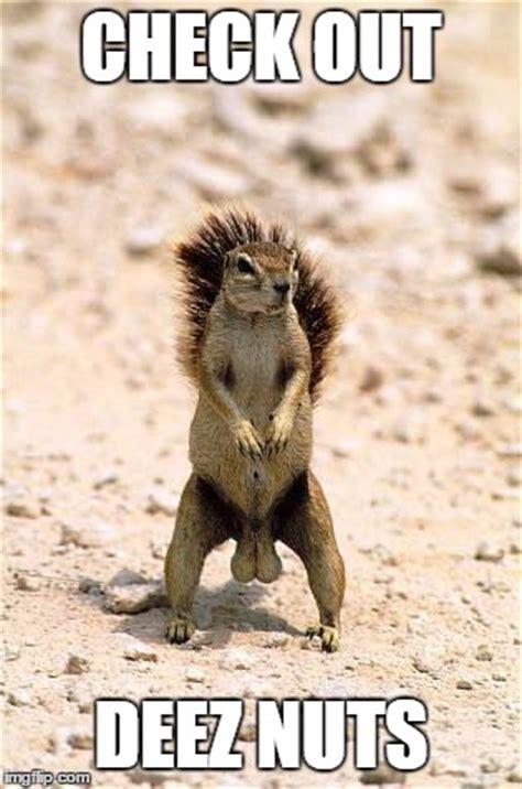Squirrel Nuts Meme - squirrel nuts meme 28 images 1000 images about memes