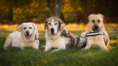 dogs name in up how to come up with the best names dogs rescue world