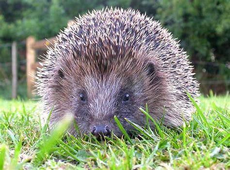imagenes de animales que hibernan el blog de marybel animales que hibernan y animales que