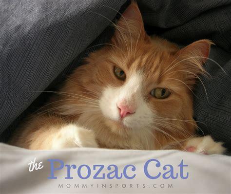 Hewitts Is On Prozac by The Prozac Cat Kristen Hewitt