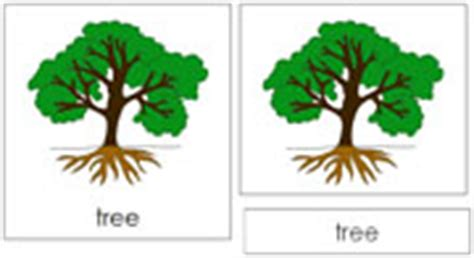 montessori tree printable montessori botany nomenclature cards by montessori print shop