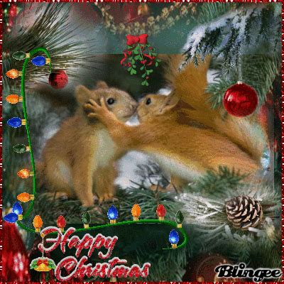 christmas squirrels picture  blingeecom