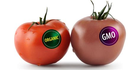 the health risks of genetically modified gmo foods reasons to avoid gmo food gmo foods dangers