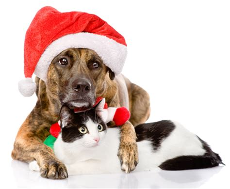 ky humane society dogs home for holidays special dec 5 8