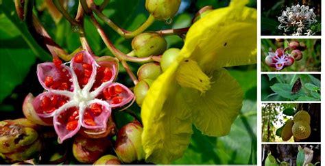 membuat makalah flora dan fauna flora dan fauna tani