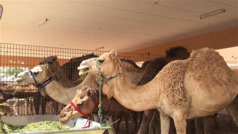 bookmyshow qatar visit hidden attractions this weekend in uae bookmyshow