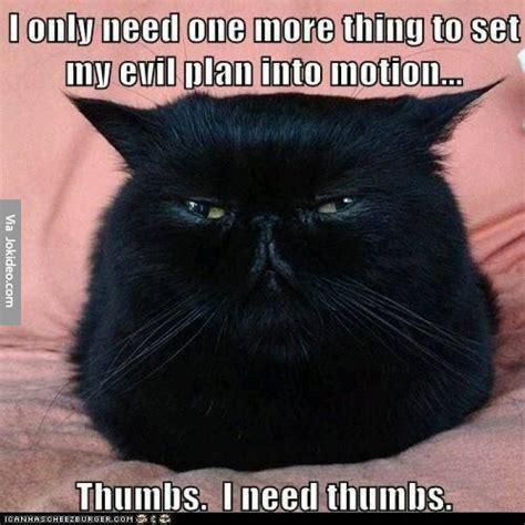 Funny Black Cat Memes - funny cat meme jokes memes pictures