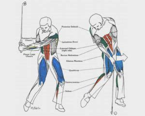 biomechanical analysis of a golf swing more muscles are used in the golf swing than you think