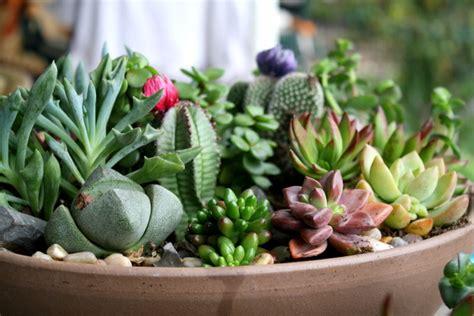 piante grasse da interno piante da interno e piante grasse garden ceggia ve