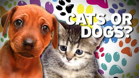 dogs vs cats dogs vs cats we a winner