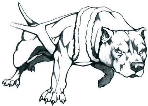 imagenes para dibujar de perros pitbull dibujo de pitbull americano imagui