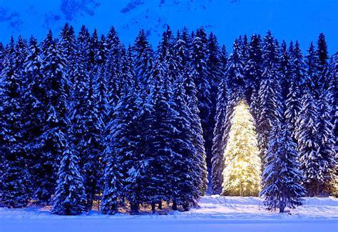 o holy lights christmas displays from around the world