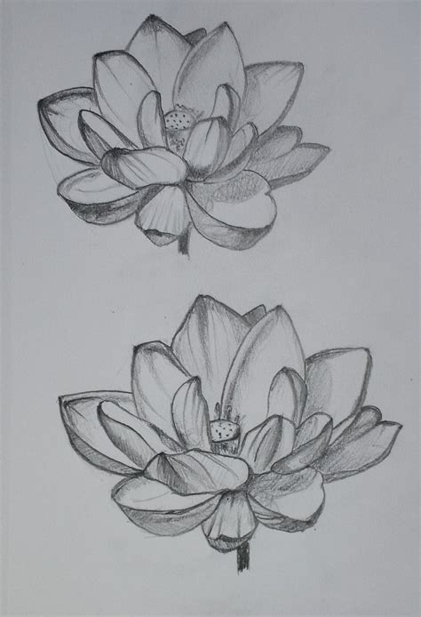 Lotus Pencil Sketch Sketch 1 Lotus By Ellizentine On Deviantart