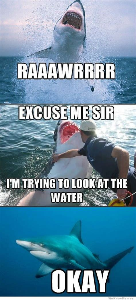 Meme Shark - gallery shark meme excuse me