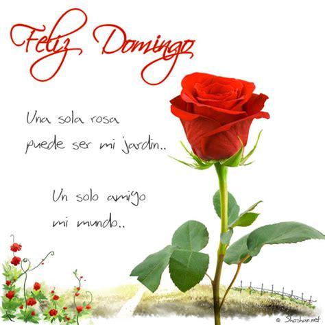 imagenes de rosas amarillas feliz domingo ofelia juarez google