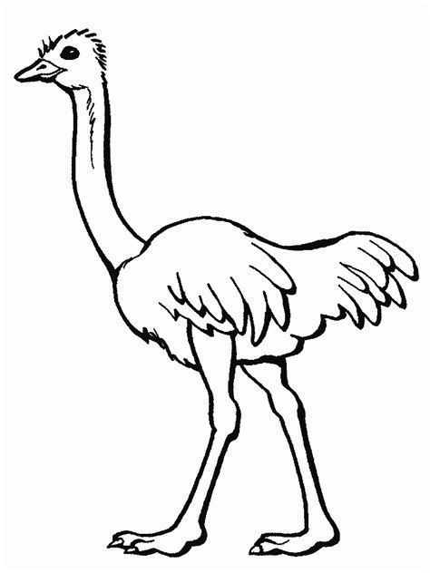 printablecoloringpages us ostrich coloring pages for preschool and kindergarten