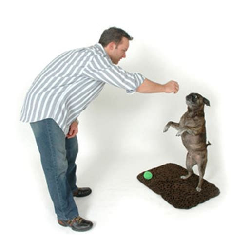 how to teach a pug tricks how to teach your tricks