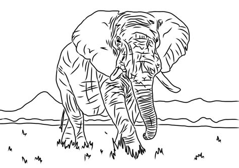 elephant coloring pages pdf elephant colouring sheet animals thecolouringbook org