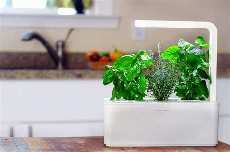 countertop herb garden a grown up smart countertop herb garden