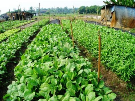 sle business plan vegetable farm urban vegetable farming how to make passive income from