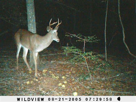small 6 point buck small 6 point buck dublin huntdrop