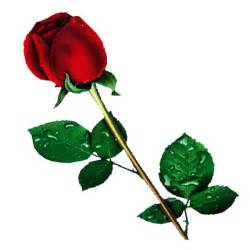 Silver Plated Bud Vase Single Red Rose Transparent Background Flower