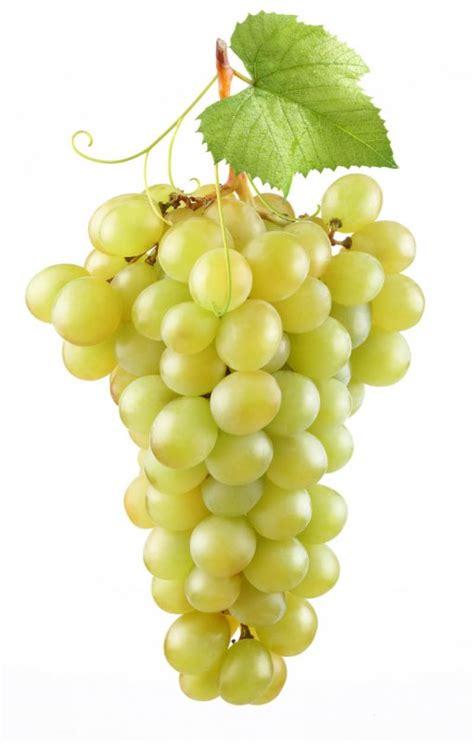 imagenes uvas fin de año di 225 logo de la familia p 233 rez las uvas de la suerte ecos