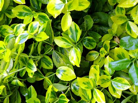 green foliage outdoor plants ranelagh park gardens chelsea 2