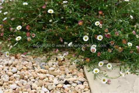Blackheath Walled Garden Daisy Garden Design London Walled Garden Error Code 5