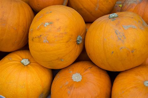 pumpkin is a fruit or a vegetable dailyonefruit