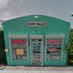 puppy palace fl puppy palace cerrado 27 fotos y 47 rese 241 as tiendas de mascotas 5909