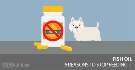 is fish bad for dogs fish for dogs and other omega 3 sources