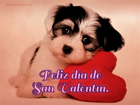 imagenes deseando un feliz dia de san valentin im 225 genes de perros con la frase feliz d 237 a de san valent 237 n