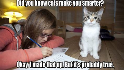 Cat Pic Meme - 28 funny heartwarming share worthy cat memes gallery