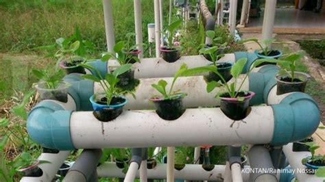 Tempat Jual Bibit Strawberry sukses bercocok tanam di lahan hidroponik 1
