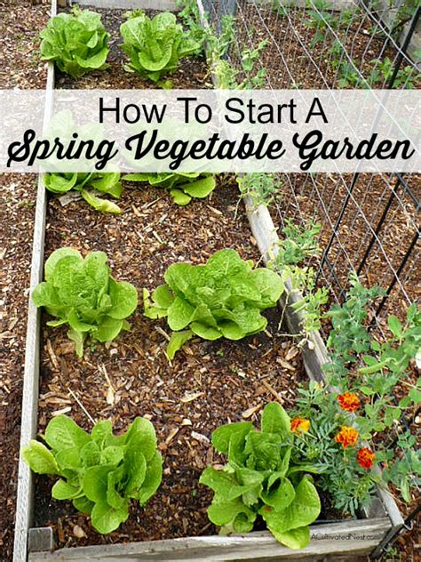 How Well Do You Springs Vegetables by How To Start A Vegetable Garden