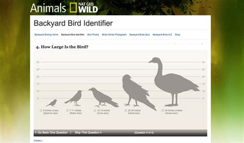 best websites to help you id a bird species backyard